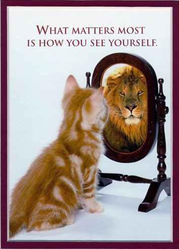 Katt vs lejon