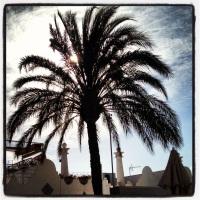 Palm i solnedgång