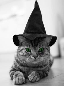 Firre-BautaWitch-katten