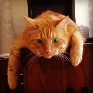 Findus Zlatan - just hanging