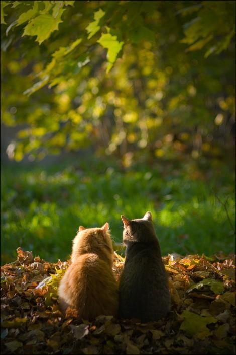 Firre med kompis