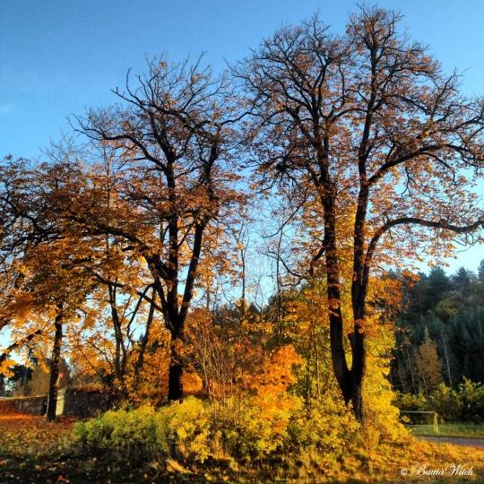Oktobermorgon Haga Norra