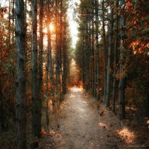 Vacker höstdag i skogen