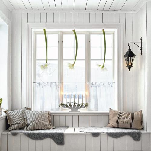 Annorlunda Amaryllis dekoration