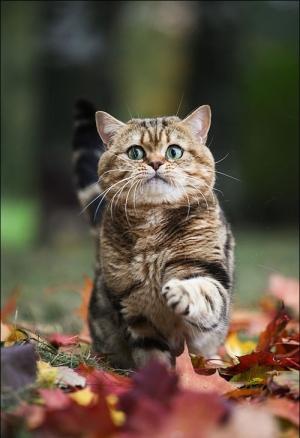 Även katter gillar att springa