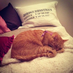 Firre sover mycket hellre på soffan