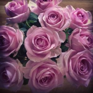 Rosor från Nikolina.jpg