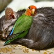Katt o underlat