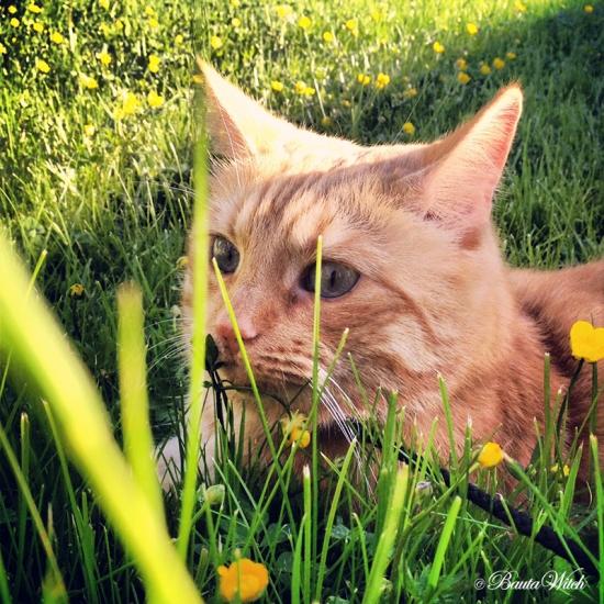 Firre i graset pa Landet