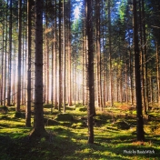 Magisk skog i Björkvik