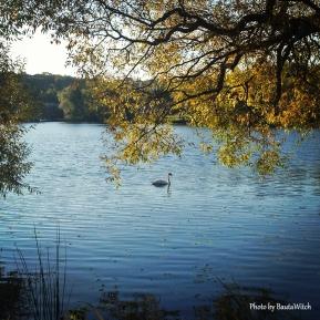 Svan utanför Johannesfred