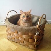 Garnkorg eller kattkorg?