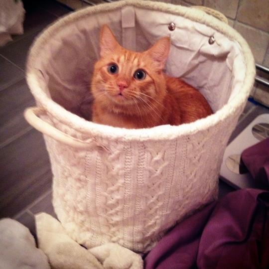 Firre i tvättkorgen