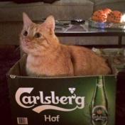 En Carlsberg är aldrig fel