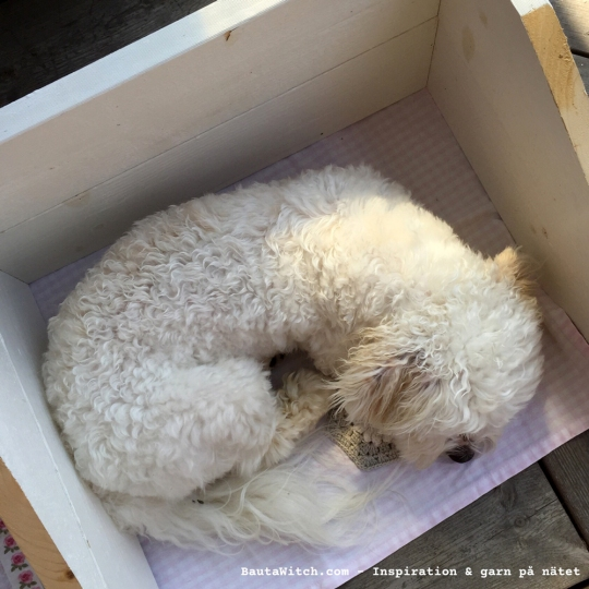 Woofie kröp in i min fotobox och vaktar min hexagon!