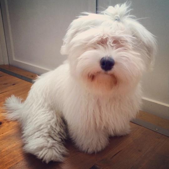 Woofie 5 månader