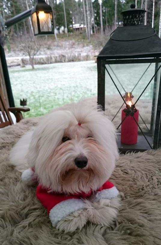 Woofie as Santa